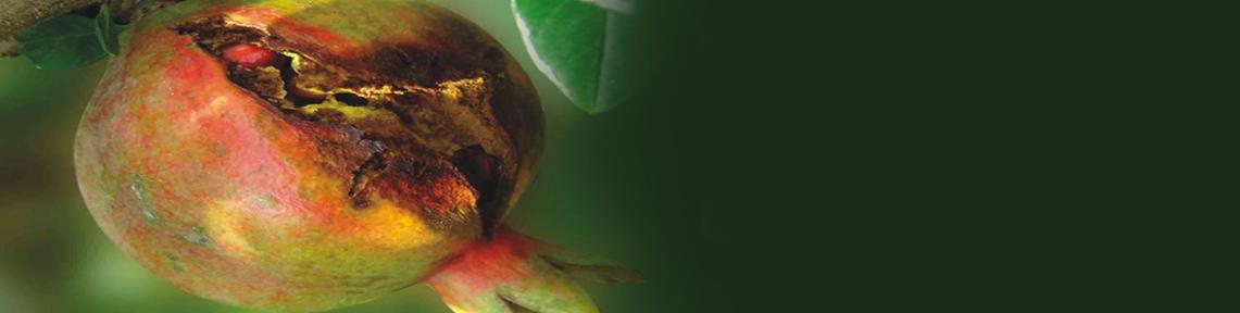 تقدير مبيدات الآفات - مجموعة ديثوكرباميت