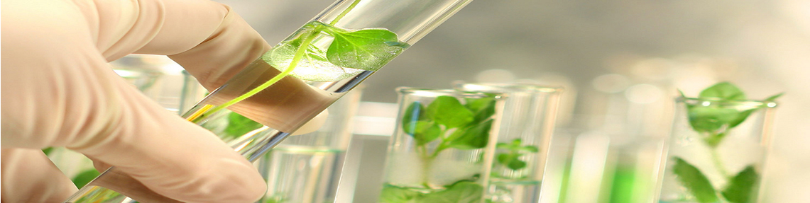 Προσδιορισμός του πυριτικού οξέος (σε νερό με το κιτ)