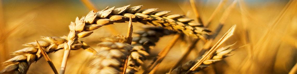农业和食品